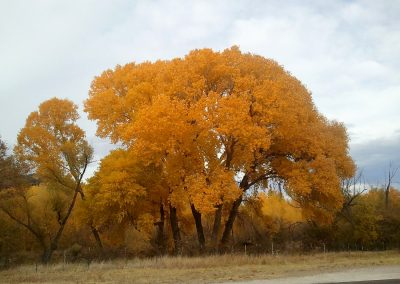 autumn in fort davis