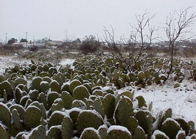 snow on the cactus in fort davis